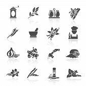 stock photo of vanilla  - Herbs and spices black icons set of vanilla basil nutmeg isolated vector illustration - JPG
