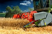 foto of fall-wheat  - Combine harvester working at wheat field at summer day - JPG