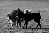 image of defecate  - Dog defecate in the garden Black and white monochrome - JPG