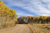 pic of apache  - Beautiful fall leaves on trees in Bosque del Apache Wildlife Refuge in New Mexico - JPG
