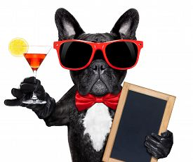 stock photo of french toast  - french bulldog dog holding martini cocktail glass ready to have fun and partyholding a blank blackboard isolated on white background - JPG