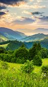 image of conifers  - summer mountain landscape - JPG
