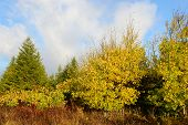 image of wilder  - Colorful trees in mountain meadow in early October  - JPG