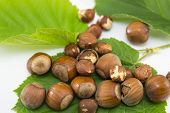 picture of hazelnut  - Raw hazelnuts on a green leaf in the shell and with broken shells  - JPG