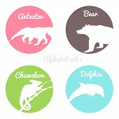 image of chameleon  - Color animals silhouettes labels in colorful circles - JPG