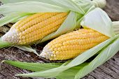 stock photo of corn  - Sweet corn closeup - JPG