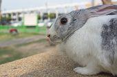 stock photo of wild-rabbit  - lonely rabbit in the wild - JPG