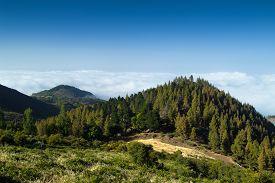 pic of burro  - Inland Gran Canaria view over the tree tops towards cloud cover on the north of the isalnd - JPG