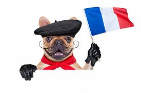 stock photo of beret  - french bulldog wearing beret hat isolated on white background waving a flag of france behind white and blank banner or placard - JPG