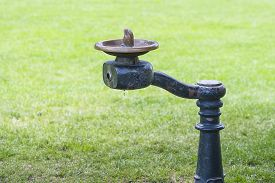 stock photo of fountain grass  - Close - JPG