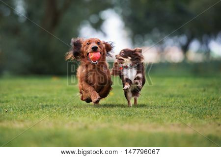 poster of two small dogs playing outdoors together in summer