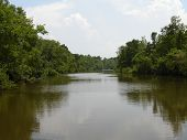 image of bayou  - A bayou near New Orleans in Louisiana - JPG