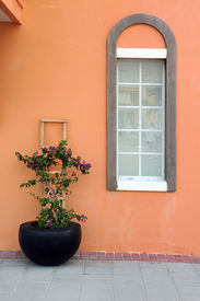 picture of flower vase  - Colorful pot with buganbilia flowers and window in the Caicos Islands - JPG