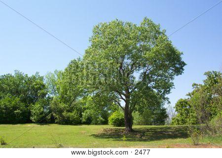Tree Park poster