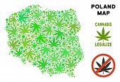 Royalty Free Cannabis Poland Map Mosaic Of Weed Leaves. Template For Narcotic Addiction Campaign Aga poster