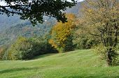 image of apennines  - meadow and colorful autumnal trees in woods on tuscan apennines near cisa - JPG