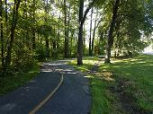 An Asphalt Path Or Trail With Shortcut Path Through The Dirt And Grass poster