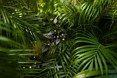 Tropical Leaves Background Photo. Concept Of Botany And Foliage. poster