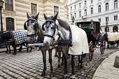 picture of stagecoach  - Horses waiting to whisk tourists around the beautiful city of Vienna - JPG