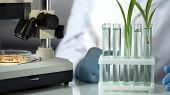 Laboratory Engineer Inventing Substance That Accelerates Germination Of Cereals poster