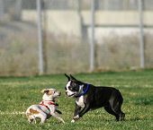 picture of dog park  - dogs at dog park - JPG