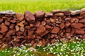 stock photo of stonewalled  - Masonry stonewall in spring with flowers at Menorca Balearic islands - JPG