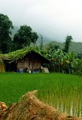 foto of hmong  - Peaceful Rice Farm In Mountains Of Sapa In North Of Vietnam Near China - JPG