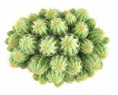 stock photo of peyote  - Plant bush - JPG