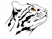 stock photo of ocelot  - The abstract image of a ocelot executed in the form of a tattoo - JPG