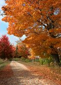 stock photo of fall trees  - fall unpaved gravel road in rural  with fall trees at there peak of color - JPG