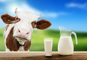 foto of pasture  - cow and milk - JPG