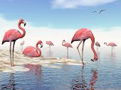 picture of flock seagulls  - Flock of pink flamingos at the beach by daylight - JPG