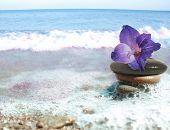 stock photo of sand lilies  - sea still life with flower and stacked pebbles - JPG