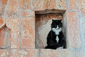 pic of niche  - Very seriously looking black cat with white spots on the nose and chest is sitting still in the niche of a bright brown historical wall like he is on duty - JPG