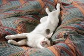 stock photo of puss  - Cat with smile on it face lying on bed - JPG