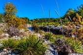 pic of crystal clear  - Fall Foliage and Interesting Plants On A Crystal Clear Creek In The Hill Country Of Texas, with Deep Blue Skies.