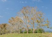 foto of row trees  - Row of deciduous trees in sunny day - JPG