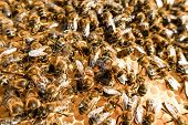 foto of swarm  - Bee swarm  - JPG