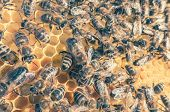 picture of swarm  - Bee swarm  - JPG