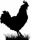 foto of roosters  - standing silhuette design vector rooster isolated  design - JPG