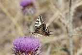 picture of butterfly  - Close up butterfly - JPG
