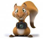 image of megapixel  - Fun squirrel - JPG