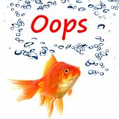 pic of oops  - oops word and goldfish showing accident failure or danger danger warning concept - JPG