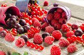 Seasonal Ripe Berries. Harvest. Red Currants, Raspberries And Gooseberries. poster