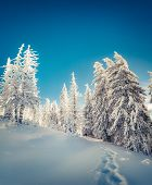 Постер, плакат: Winter Fairytale Scene In The Mountain Forest