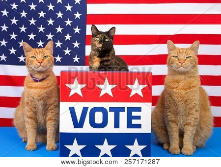 poster of One Tortoiseshell Cat Sitting Behind A Podium With Vote Sign On The Front, Orange Tabby Cat Sitting