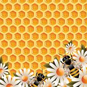 image of honey bee hive  - Floral Honey Background - JPG