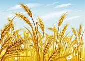 Постер, плакат: Пшеница в поле