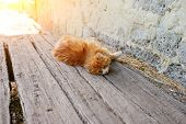Lazy Red Cat On Sunny Summer Day. Selective Focus poster