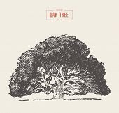 Old Oak Tree Hand Drawn Engraved Style, Vector poster